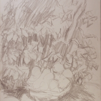 Plums & Leaves, 1966, Pencil on paper, 29 x 23 cm, Gotlib Family Collection